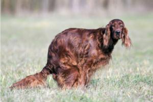 La pala completa en la caca de tu perro