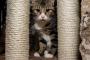 Feliway y el comportamiento de su gato