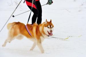6 divertidos juegos para jugar con tu perro en la nieve