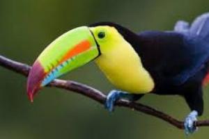 Parásitos gastrointestinales en aves