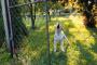 ¿Tu perro es reactivo o agresivo? Cómo saber la diferencia y qué hacer