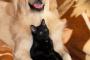 Razas de perros amigables con los gatos