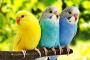 5 de las aves más tranquilas y silenciosas