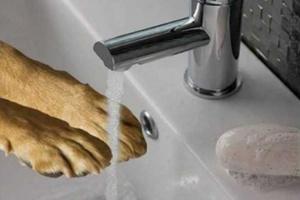 Lávese las manos siempre que visite el zoológico