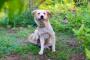 ¿Pueden los perros ser alérgicos a la hierba?