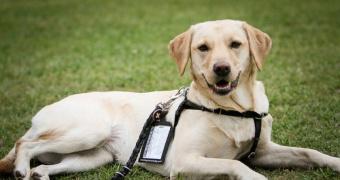 Cómo entrenar a tu perro para ir a su lugar