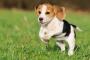 ¿Cuánto ejercicio necesita un cachorro?