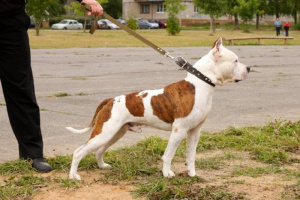 10 consejos para navegar por decisiones difíciles sobre tu perro