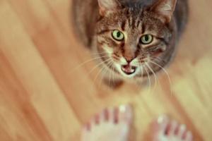 Algunas razones por las que su gato busca atención
