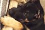 Ayuda a tu perro a ser un embajador de raza increíble