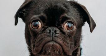 Neuritis del trigémino en perros