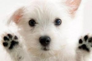 Alergias de los perros a los alimentos