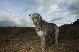 Deformidad ósea y enanismo en perros