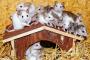 Proporcionando un hogar para tus ratones