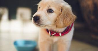 Síndrome uveodermatológico en perros