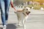 ¿Su perro se abalanza sobre otros perros cuando sale a caminar?