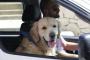 Conducir con perros: Consejos de viaje por carretera.