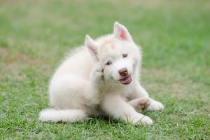 Alergias del perro
