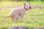Gastroenteritis en perros: síntomas, causas y tratamientos.