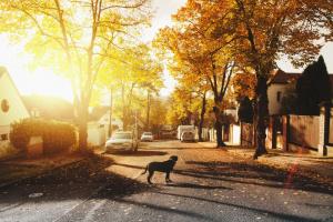 Pasos para encontrar a su perrito perdido (manejo de una pesadilla)