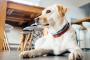 Cómo calmar a un perro que sufre de fobia a la tormenta