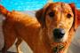 Las 5 áreas principales que pueden causar dolor en los perros.