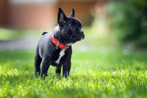 Reflujo ácido en perros