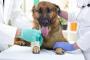 Cáncer de amígdalas (carcinoma de células escamosas) en perros