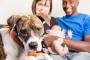 Cómo entrenar a tu perro para manejar a un niño pequeño