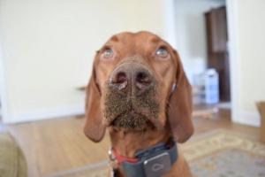 Cómo el olor en tu casa podría deleitar o ofender a tu perro