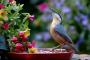 ¿Como atraer aves silvestres a mi jardín?