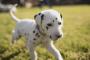 ¿Es peligroso fumar hierba alrededor de perros?