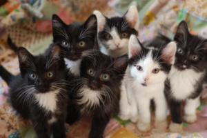 ¿Cuántas camadas puede tener un gato en un año?