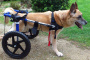 Cómo hacer una silla de ruedas doggy