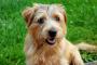Urolitiasis de fosfato de calcio en perros