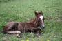 Reproducción de caballos