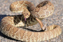 Serpientes y cómo mantener a su mascota segura