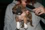 Limpiar las orejas y los ojos: una guía práctica para cachorros (y perros).