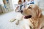 5 maneras de mantener a su perro en calma durante las renovaciones de su hogar
