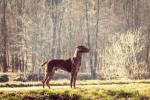 Defectos de nacimiento espinales y vertebrales en perros