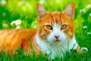 Ayudando a tu gato con su tos