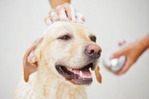 ¿Con qué frecuencia debo bañar a mi perro?