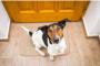 ¿Por qué mi perro se vuelve loco por el timbre?