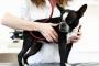 Taquicardia (frecuencia cardíaca rápida) en perros: síntomas, causas y tratamientos.