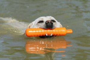 Cuidado: algunos juguetes para perros pueden contener sustancias químicas mortales.