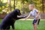 10 cosas que los padres de perros piensan pero no dicen a los padres de los niños.