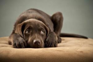 Sobre la disciplina del perro