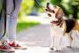 Hacer ejercicio y alimentar a su perro y gato para mantenerlos en forma