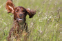 Enfermedad de Chagas en perros