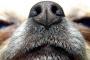 Ritos nasales de tu perro